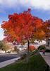 November 17, 2015 - Our beautiful fall tree