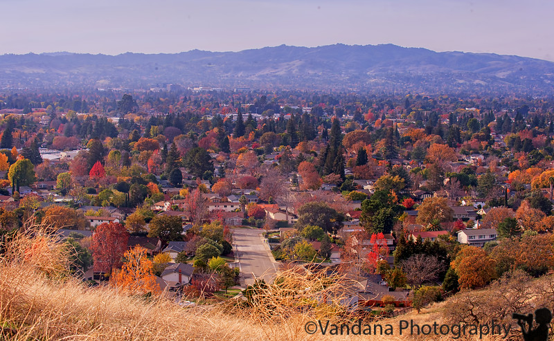 December 11, 2015 - Fall in the Ygnacio valley