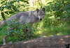 August 25, 2015 - the arctic wolf
