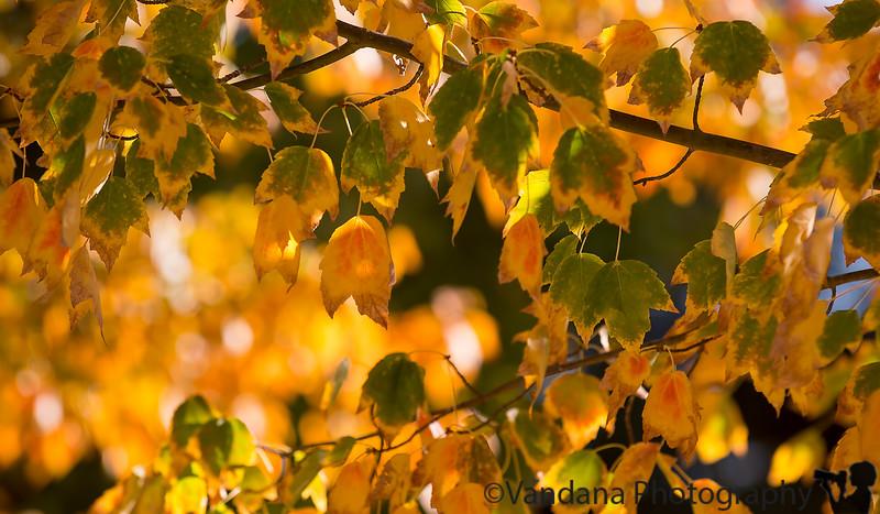 November 5, 2015 - Fall !