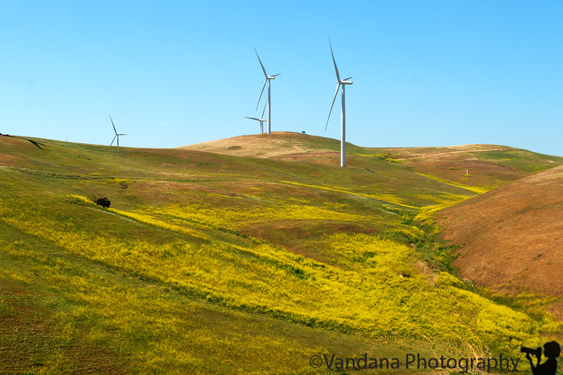 April 25, 2015 - Windmills and wildflowers