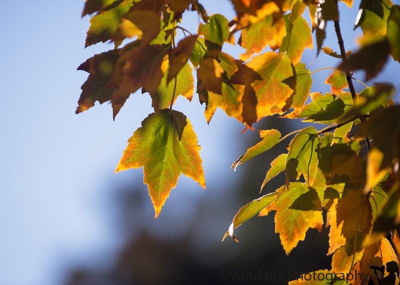 November 28, 2015 - Fall
