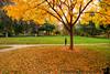 November 21, 2015 - Enjoying fall