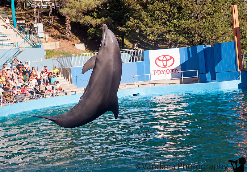 October 9, 2015 - the playful dolphins