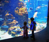December 18, 2015 - At the Aquarium at California Academy of Science<br /> <br /> last day of preschool for 2015 ! Vacation starts tomorrow, 1 week for me, >2 weeks for Arjun !! Off on a flight to Houston tomorrow and then on a cruise to Cozumel, Belize, Honduras for a week !