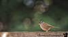 December 12, 2016 - little birdy in the backyard