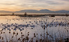 December 29, 2016 - Hundreds of migratory snow geese at Sacramento National Wildlife Refuge..<br /> very nice to see and hear, but not so much fun to photograph - not so close as Bosque, NM which I still miss and hope to visit