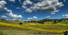 April 30, 2016 - the beautiful mustard fields