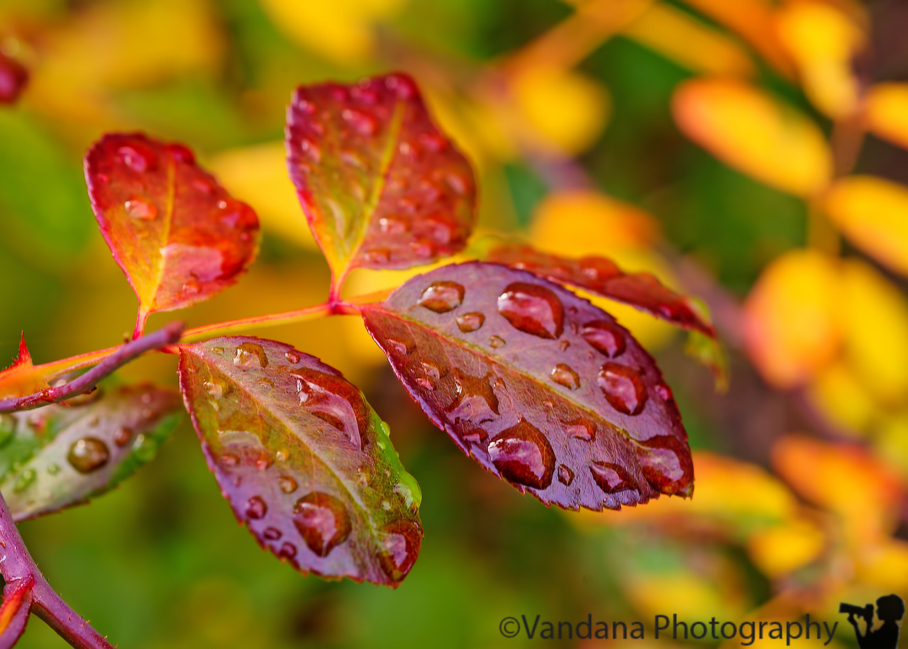 January 5, 2016 - colors and drops in the backyard