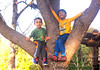 March 17, 2017 - Arjun and Pranav monkeying up a tree