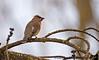 January 24, 2017 - backyard bird - have forgotten its name, long time, no birding !
