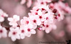 March 10, 2017 - Blossoms