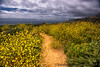 May 29, 2017 - the path of gold, Monterey peninsula