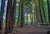 January 21, 2017 - the lovely redwoods