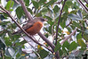 January 25, 2017 - Robins are here, Spring is near !