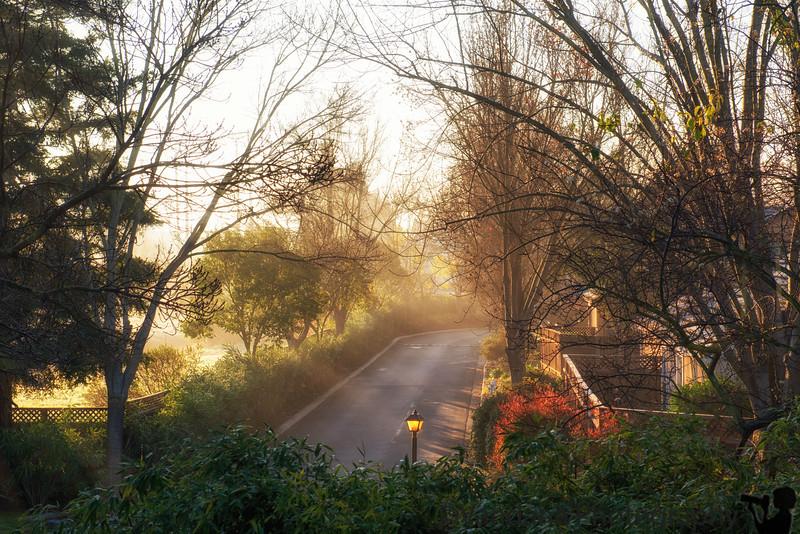 January 10, 2016 - Early morning mist