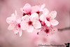 March 18, 2017 - Pink, pink !