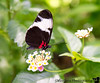 March 15, 2017 - Butterflies at the Rainforest, Cal Academy of Sciences