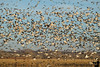 January 29, 2018 - Winged migration
