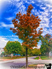 October 2, 2018 - Fall starts<br /> <br /> iphone 7 picture