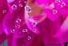 October 5, 2018 - Flower inside a flower<br /> <br /> Drop refractions macro after a long time with my nearly broken 60mm macro lens( about 15yrs old, and overused!)