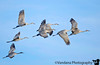January 26, 2018 - Flying in formation