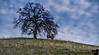 February 15, 2018 - the lone tree, Lime Ridge Open Space