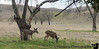 January 12, 2018 - rains bring out the deer
