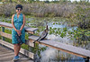 December 24, 2018 -  V and other animals, Anahinga Trail, Everglades National Park