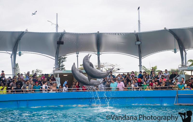 December 29, 2018 - Dolphin show, Miami Seaquarium