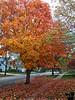 October 27, 2018 - Fall in the neighborhood
