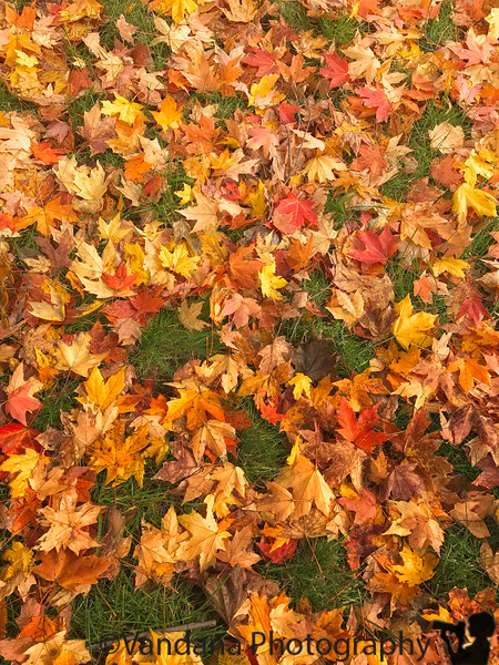 October 29, 2018 - Crunchy leaves