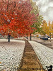 November 21, 2019 - Fall and snow