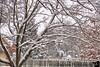January 21, 2019 - Snow in the backyard
