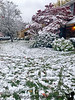 November 21, 2019 - Snow storm