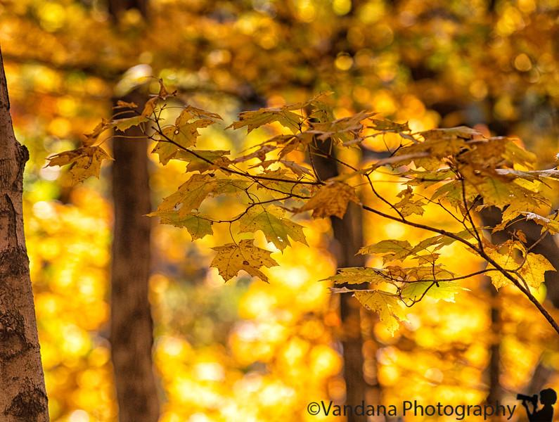 October 18, 2019 - Fall leaves bokeh