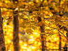 October 18, 2019 - Fall leaves bokeh