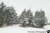 January 29, 2019 - Snow trees