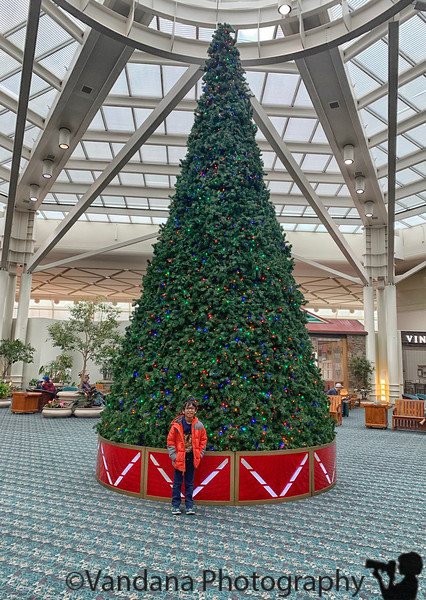 November 25, 2019 - A with Christmas tree