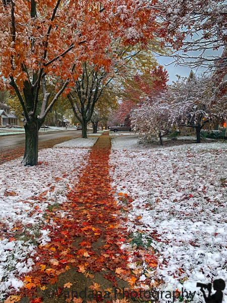November 18, 2019 - Fall colors in snow