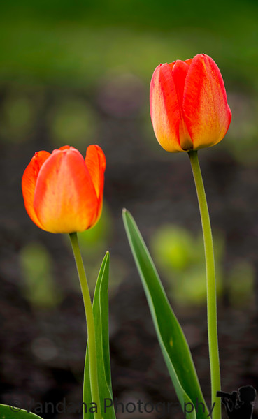 May 3, 2019 - Spring