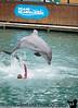 January 5, 2019 - Dolphin show, Miami Seaquarium