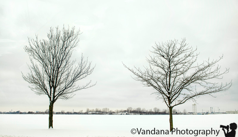 January 30, 2019 - trees in the snow