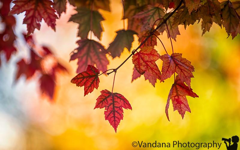 October 1, 2019 - lovely reds