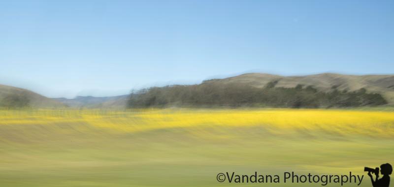 April 15, 2019 - The wildflower blur