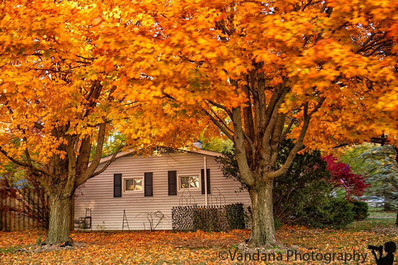 October 24, 2019 - More fall shots in the neighborhood