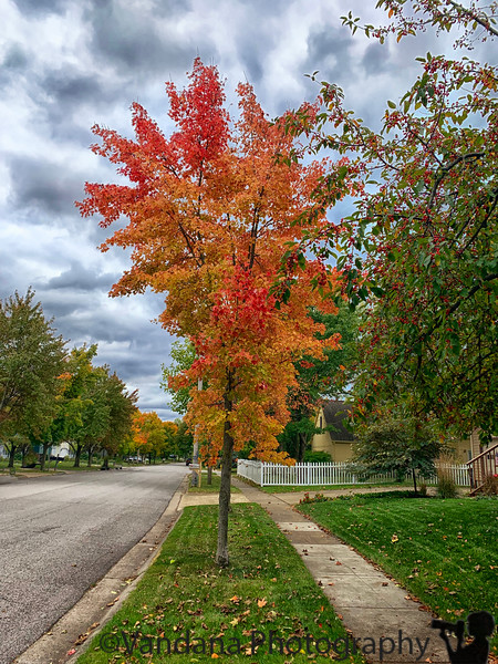 October 7, 2019 - one of the first fall trees of the season