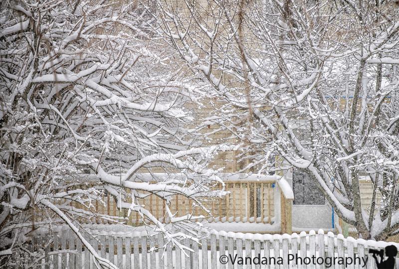 February 1, 2019 - More snow scenes