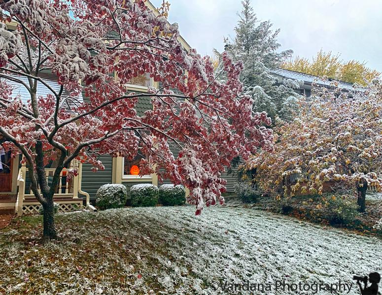 November 20, 2019 - Fall/snow colors