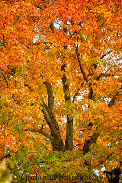 September 25, 2019 - and fall is here !